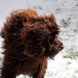 Coco in the snow